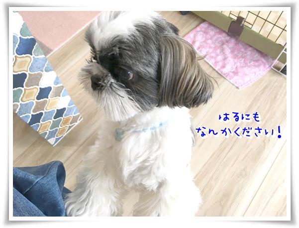 IMG_2049_1.jpg