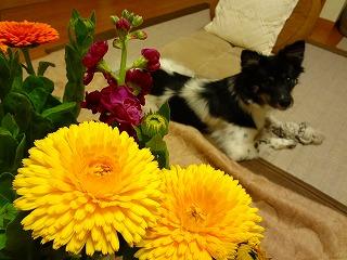 bouflower.jpg