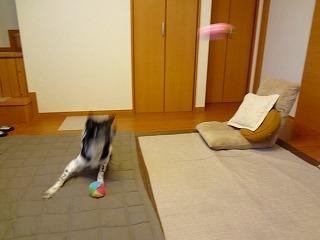 catch1.jpg