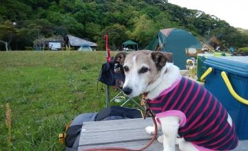 小梅キャンプ1