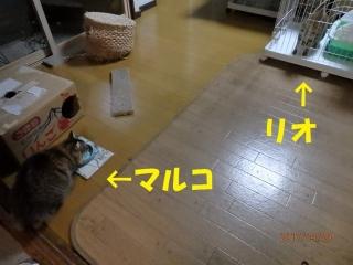 blog170413_3.jpg