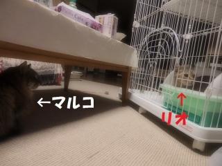 blog170420_2.jpg