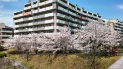 170412sakura1.jpg