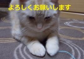 satsuki0414