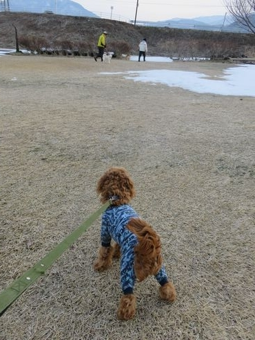 IMG_7213柴犬