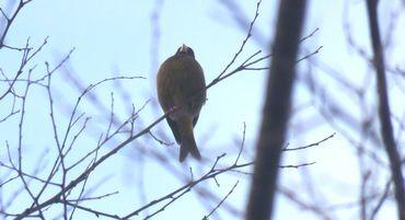 IMG_7299野鳥