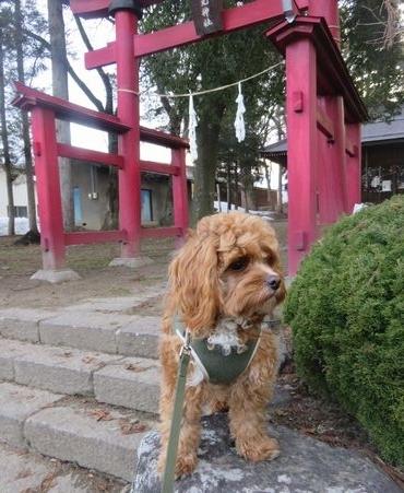 IMG_7325神社