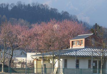IMG_7672魯桃桜