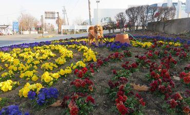 IMG_7746パンジー花壇