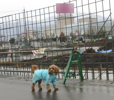 IMG_7824雨散歩