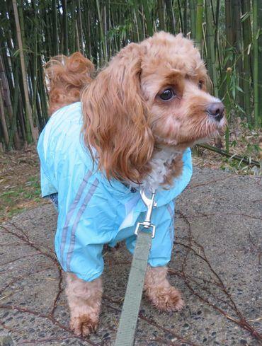 IMG_7834雨散歩
