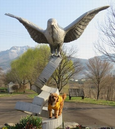 IMG_8000柳
