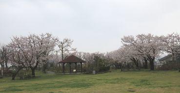 IMG_8100バラ公園