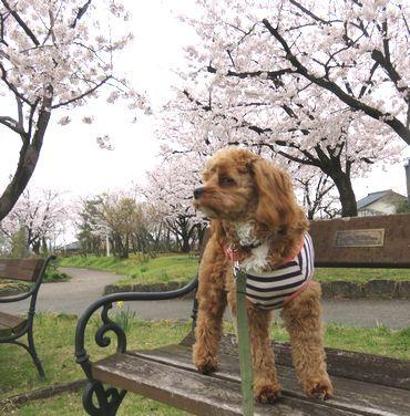 IMG_8101バラ公園