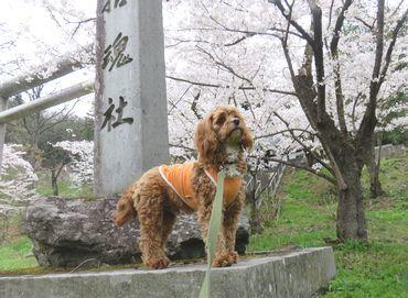 IMG_8186東山公園