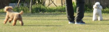 IMG_8427バラ公園