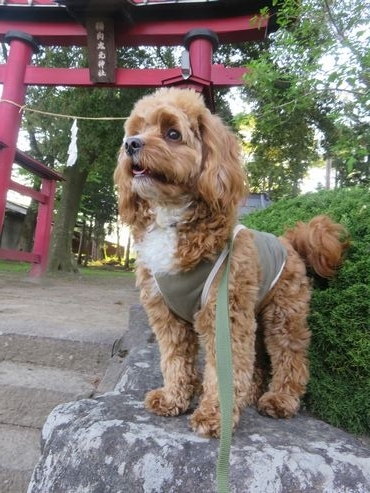 IMG_8603神社