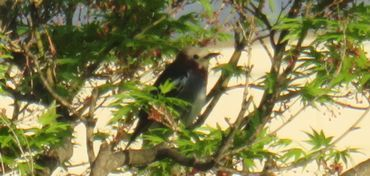 IMG_8597野鳥
