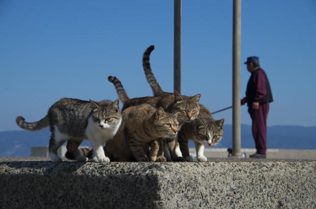 kagoshima10.jpg