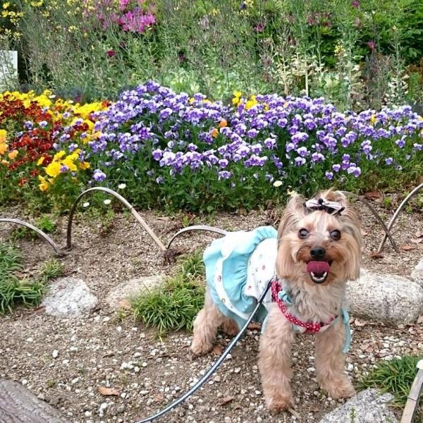 お花の前でパチリ