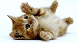 l201301161000 猫ちゃんフリー画像