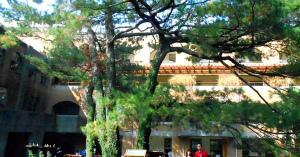wxaoVPXs台湾大学にリュウキュウマツの