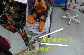 わんにゃんドーム2017-5