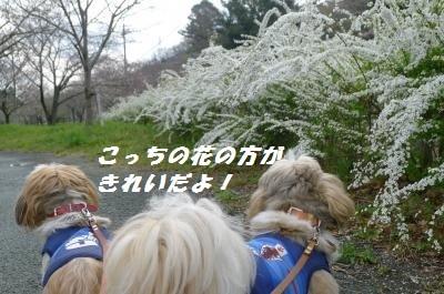 cy3273.jpg