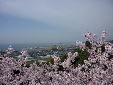 桜 花見 満開 豊川 御津 花屋 花夢