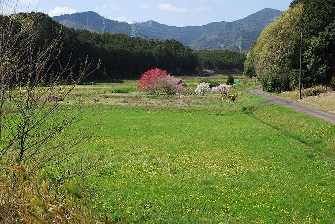 本宮山と花