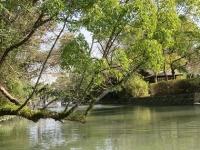 柳川川下り木の枝くぐり