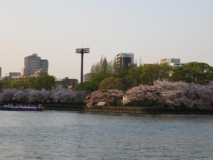 大川の桜 (2)