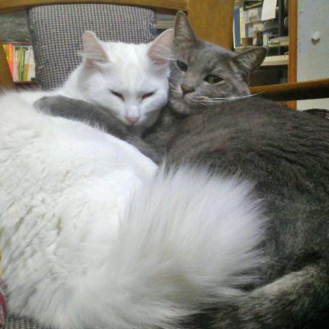 夢アニキとポン子姉ちゃん