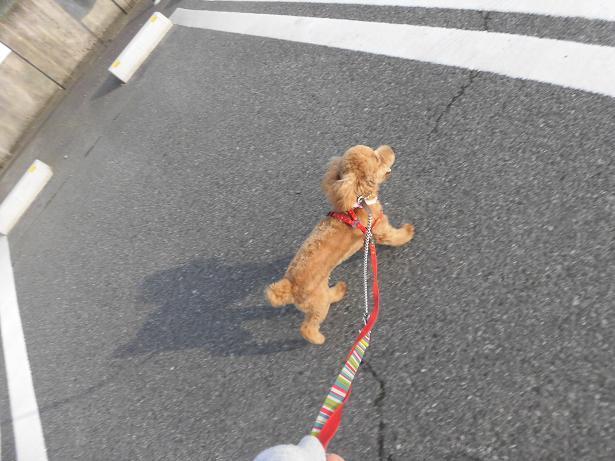 モモ散歩2