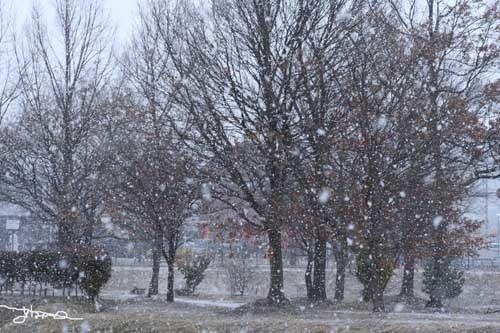 公園の雪308