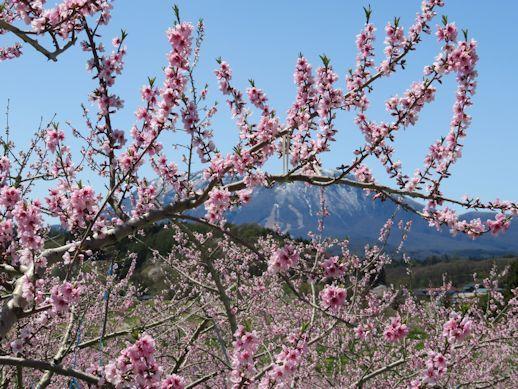 桃の花の向こうには いいづなリゾート好きー場