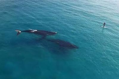 【感動!】パドルボーディングでクジラと遭遇!
