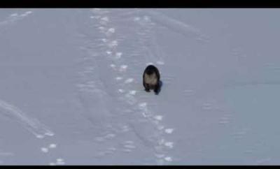 【その他】カワウソの赤ちゃんが凍った川で遊んでる!