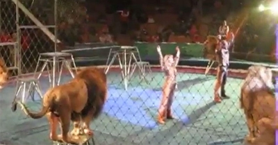 【衝撃!】サーカスでライオンに襲われる!!!