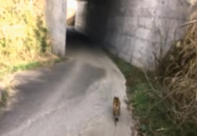 橋の向うまで散歩09L