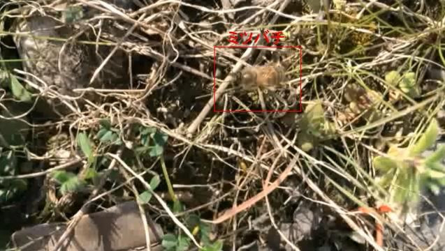 春を探しに10 HD ミツバチ