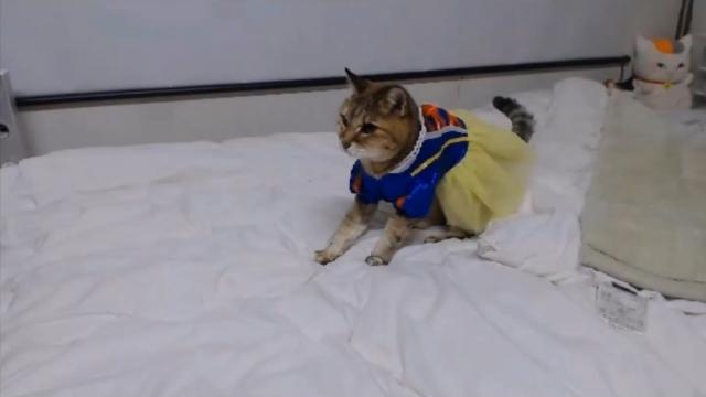 バースデーパーティ(白雪姫)03