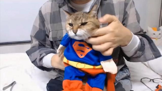 バースデーパーティ(スーパーマン)10