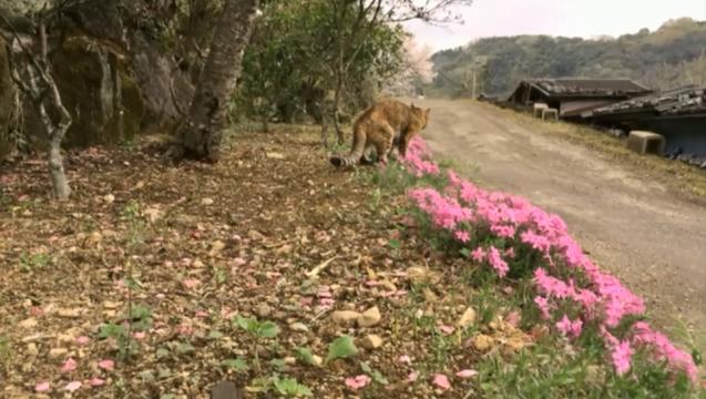 ピンクの花と山とプラン02