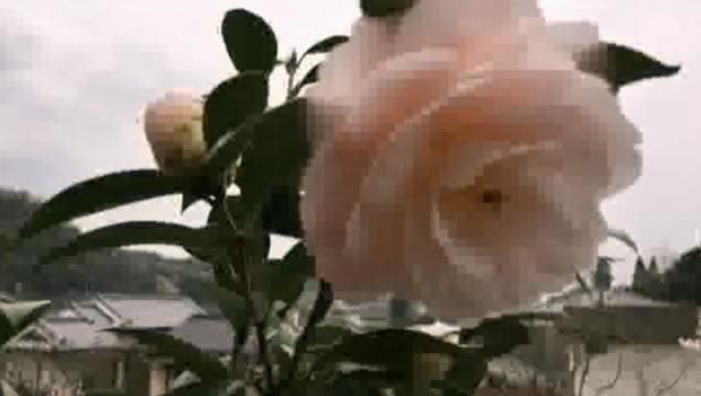 お花見配信2017 - 13 薄いピンクの花