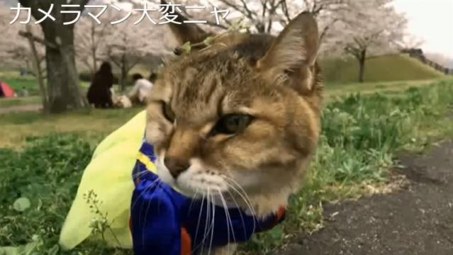 お花見配信-自然公園編-10 花飾りのプラ雪姫02