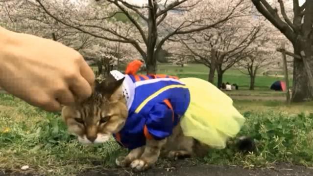 お花見配信-自然公園編-09 花飾りのプラ雪姫01