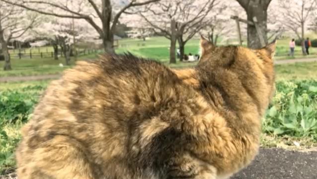 お花見配信-自然公園編-05 桜とプラン02