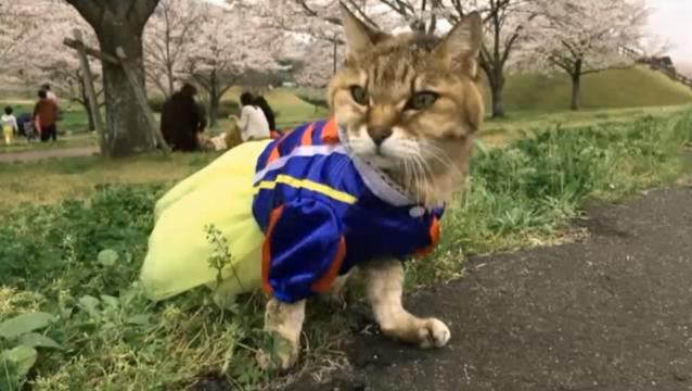 お花見配信-自然公園編-11 プラ雪姫03