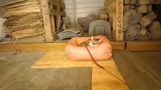 """お外で留守番09 - ピンクの""""プラン""""スベッドで寝るプラン"""